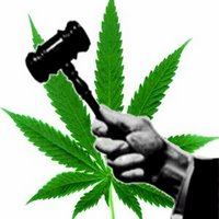 SSDP Students Seek to Unite Marijuana Law Reform Movements in Oregon and California