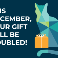 Our top 10 of 2019 + 6 days left to double your gift